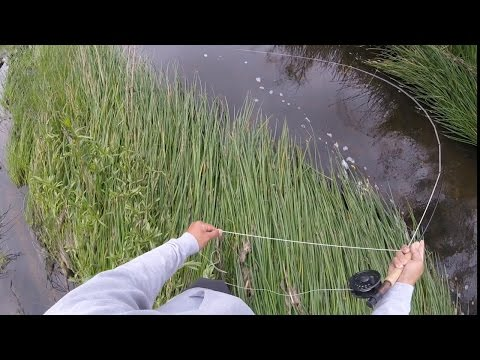 Fly Fishing for Sunfish -