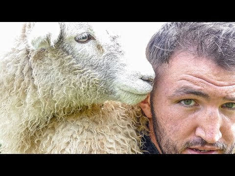 HUGHIE FURY   IF YOU CAN CATCH A SHEEP..YOU CAN CATCH JOSEPH PARKER!!