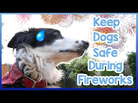 How To Keep Dogs Safe During Fireworks! Keep Your Dog Safe on Bonfire Night and Thanksgiving!