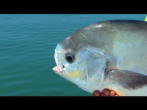 Monster Permit Tripletail on DOA Fishing Lures in Islamorada Florida
