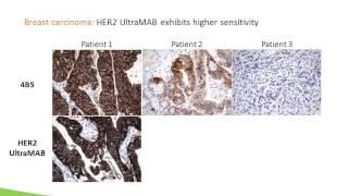 Webinar: New Tool for Antibody Specificity Testing