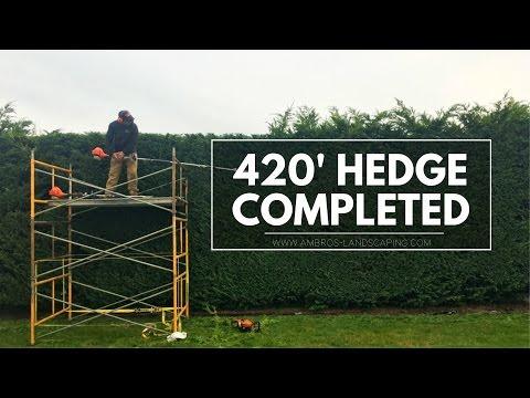 Huge 420' Hedge Trimming Job Completed