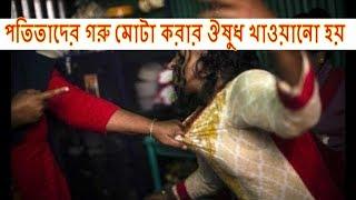 Madam of Brothel II পতিতাদের গরু মোটা করার ঔষুধ খাওয়ানো হয়  || Prostitute in Bangladesh