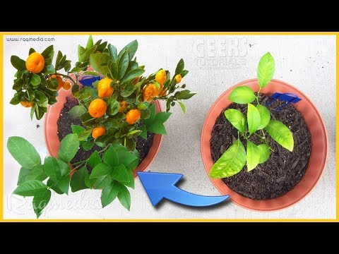 How to Make Plants Grow Faster [ with Proof ]