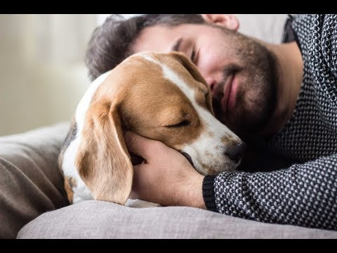 12 ways dogs can help in coping with a mental illness