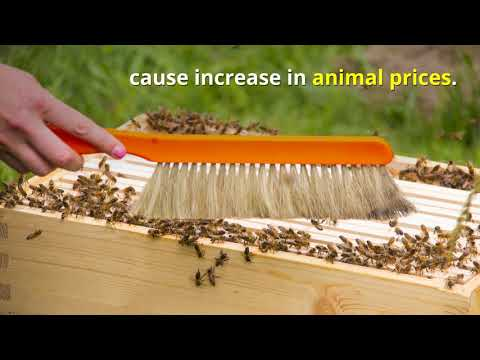What Happens If There Are No Bees?