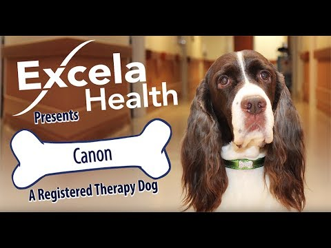 Canon A Registered Therapy Dog