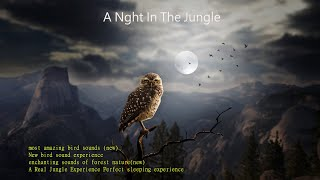 most amazing bird sounds(new)🌹Relaxing forest sounds and Bird songs🤷♀️#Playlist