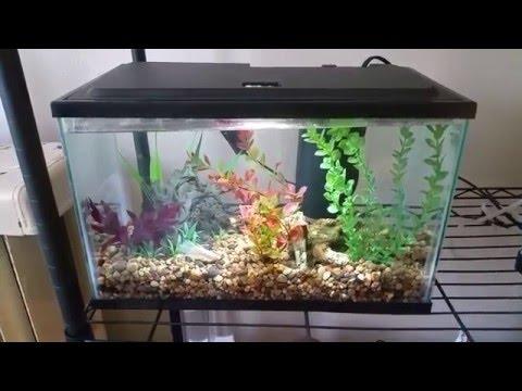 Different betta fish tank sizes
