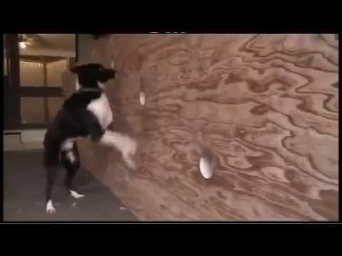 Steve Austin   Elite Dog Trainer