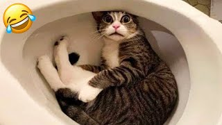 TRY NOT TO LAUGH WATCHING FUNNY ANIMAL FAILS VIDEOS 2021 #3