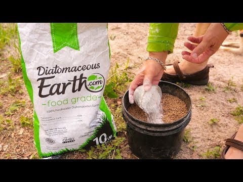 Deworming Your Homestead with DE (diatomaceous earth)