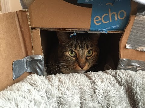 How to make a cat bed from cardboard boxes!