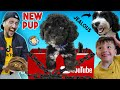NEW PUPPY Surprise YOUTUBE Sent Us This BOX FV Family Surprise Oreo39s Brother Vlog