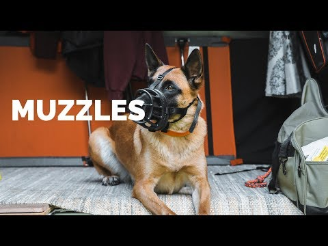 Muzzles - What's the DIFFERENCE?!