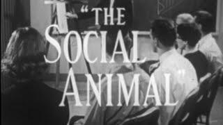 The Social Animal (1963)