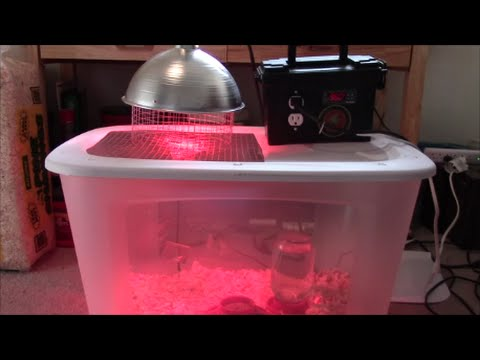 How to Build an Automatic Temperature Controlled Brooder Box