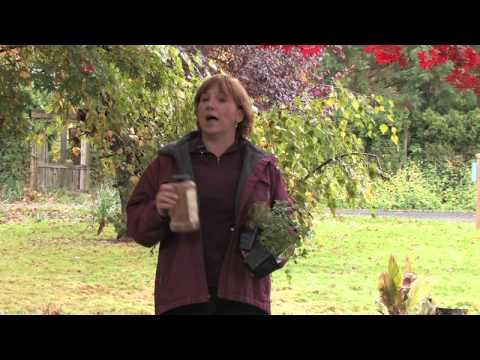 Garden Maintenance : How to Repel Flies With Herbs