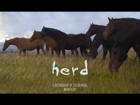 Herd Film Preview