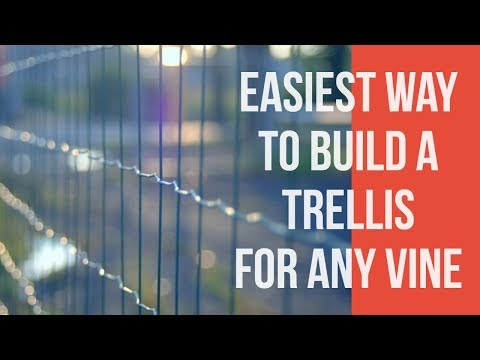 how building a trellis for grape vines