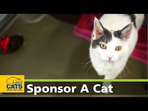 Pippy - Meet the Cats Protection Sponsor Cats series 2, episode 5