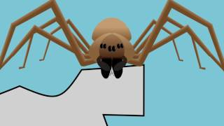Download A Guide to Brown Recluse Spiders Video