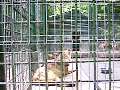 wolves' enclosure - Oradea Zoo - Romania