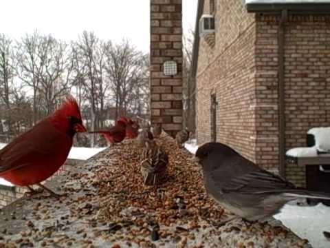 Winter Birds - Entertainment for Cats