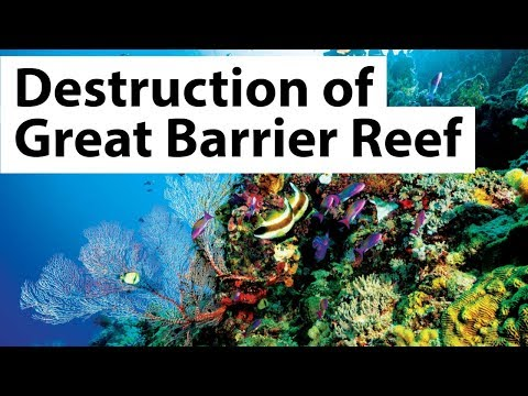 Great Barrier Reef - Coral bleaching & Climate change are killing Great Natural Wonder of Australia