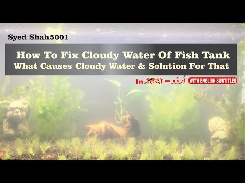 How to Fix Cloudy Aquarium Water What Causes Cloudy White Aquarium Water how to keep clean water