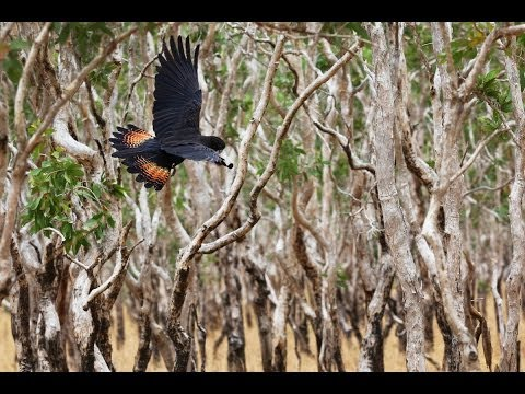 Cape York Peninsula - World Heritage Protection for world class country