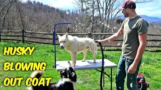 Husky Coat Blow Out!