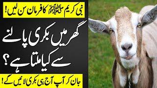 Gar Main Bakri Palna Kaisa Hai   How is a goat raised in the house?   Farman e Nabvi saw