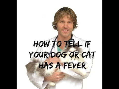 How To Tell If Your Dog Or Cat Has A Fever