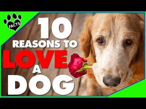 Dogs 101: 10 Reasons To LOVE a DOG or 10 ❤️❤️❤️  Adopt - Animal Facts