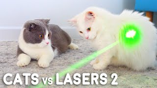 Cats vs Lasers 2