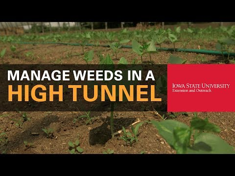 How to Manage Weeds in a High Tunnel