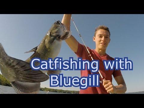 Catfishing with Bluegill Cut Bait