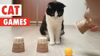 Cat Games   Playful Cats Video Compilation