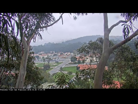 Presidio SF Live Webcam of Red-tailed Hawk Nest