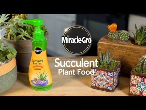 How to Use Miracle-Gro® Succulent Food to Feed Your Succulents and Cactus Plants