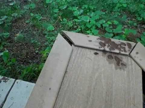 Composite Deck Failure