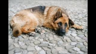 Dog Constipation Remedies Probiotics For Constipation In Dogs