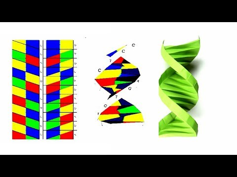 Origami DNA; How to Fold a Paper Origami DNA