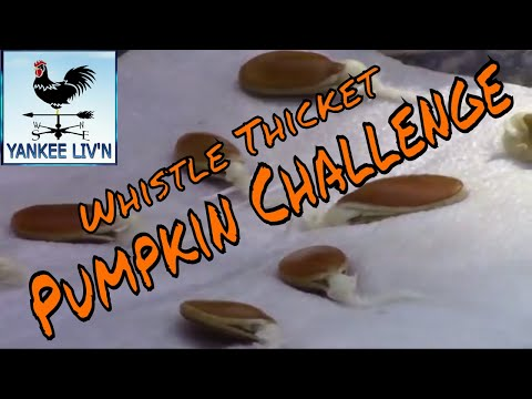 Yankee Liv'n Enters The Whistle Thicket Pumpkin Challenge