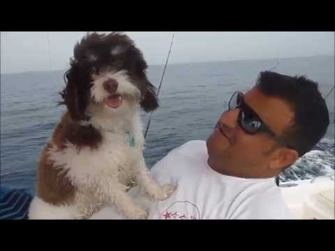 Fishing Adventures #103 - Cute Girl Fishing in Fujairah