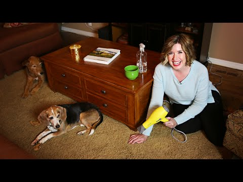 How To Fix Carpet Dents Using Ice Water | Don't Look Under The Rug® with Amy Bates