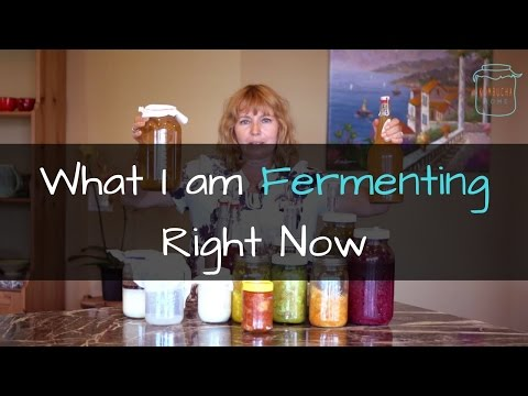 Welcome to Kombucha Home: What I am Fermenting Right Now