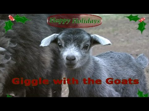 A GIGGLE with the GOATS Jingle Bells Holiday Performance