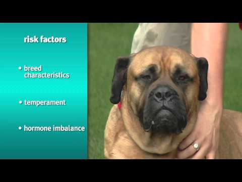 Banfield Pet Hospital - Risks and Signs of Obesity in Dogs and Cats